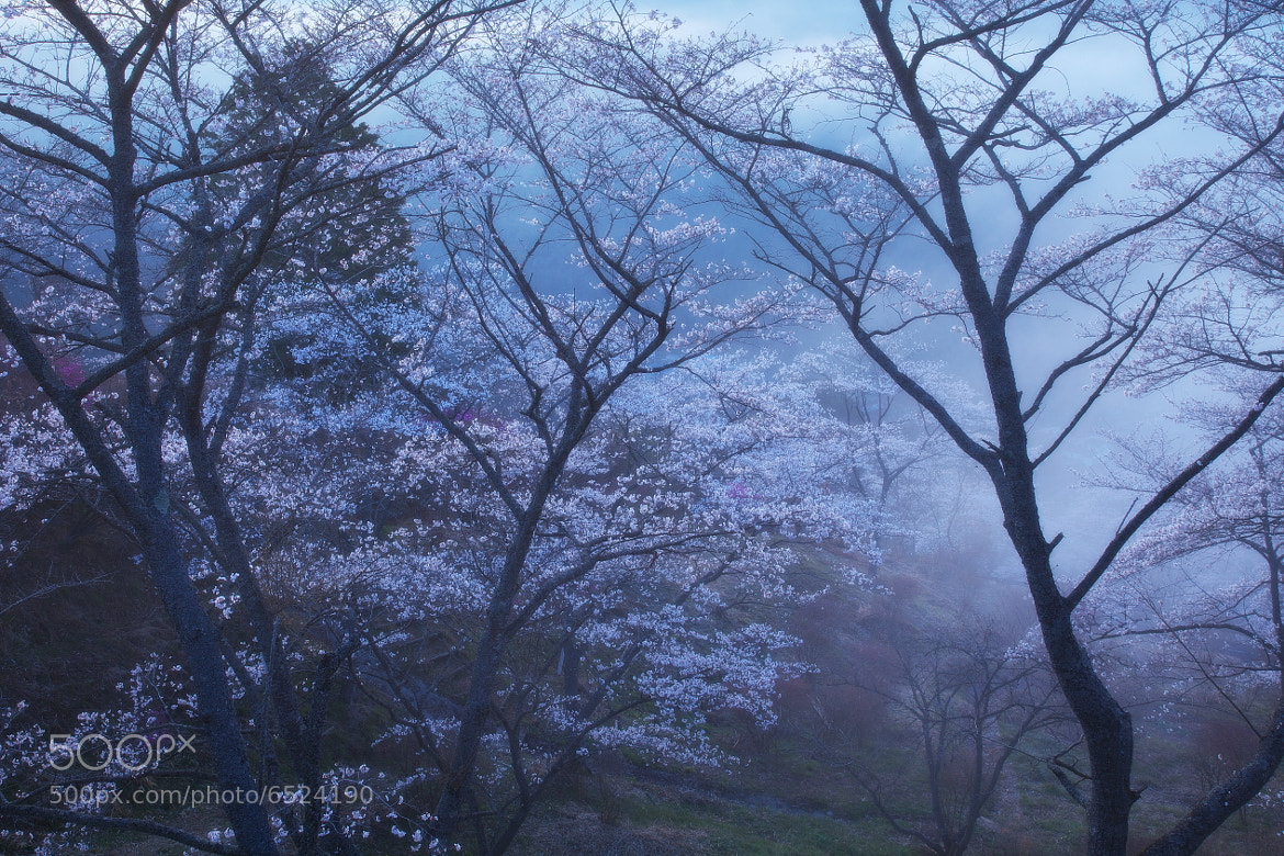 Photograph SAKURA by Tashi Delek on 500px