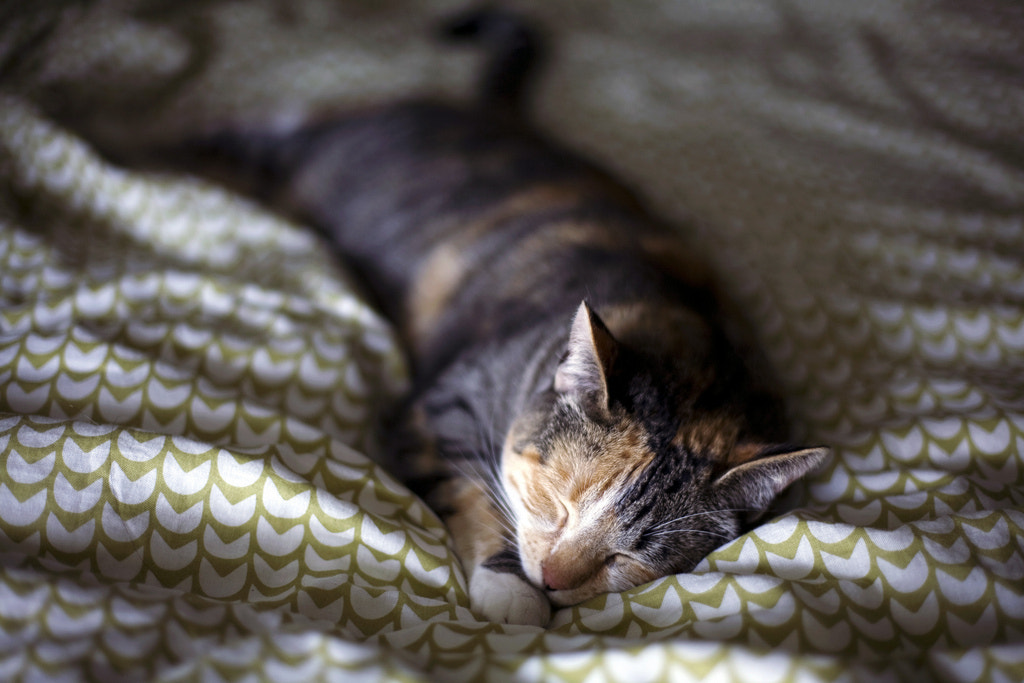 Photograph ever napping by Jessica N. on 500px