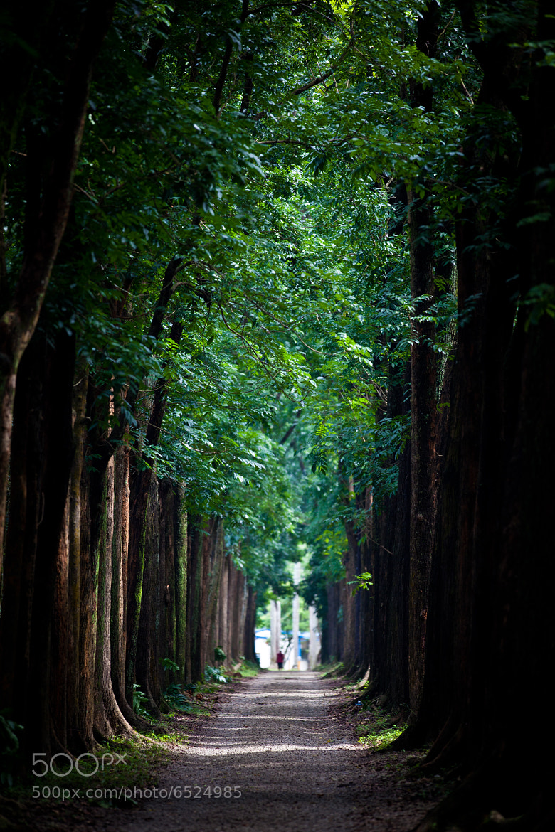 Photograph Green Tunnel by Yu Ren Chang on 500px