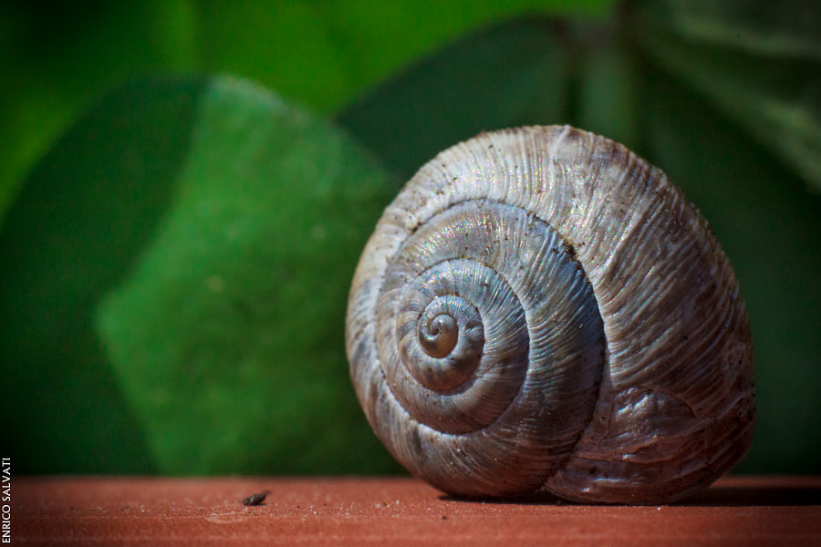 Photograph Macro Snail by Enrico Salvati on 500px