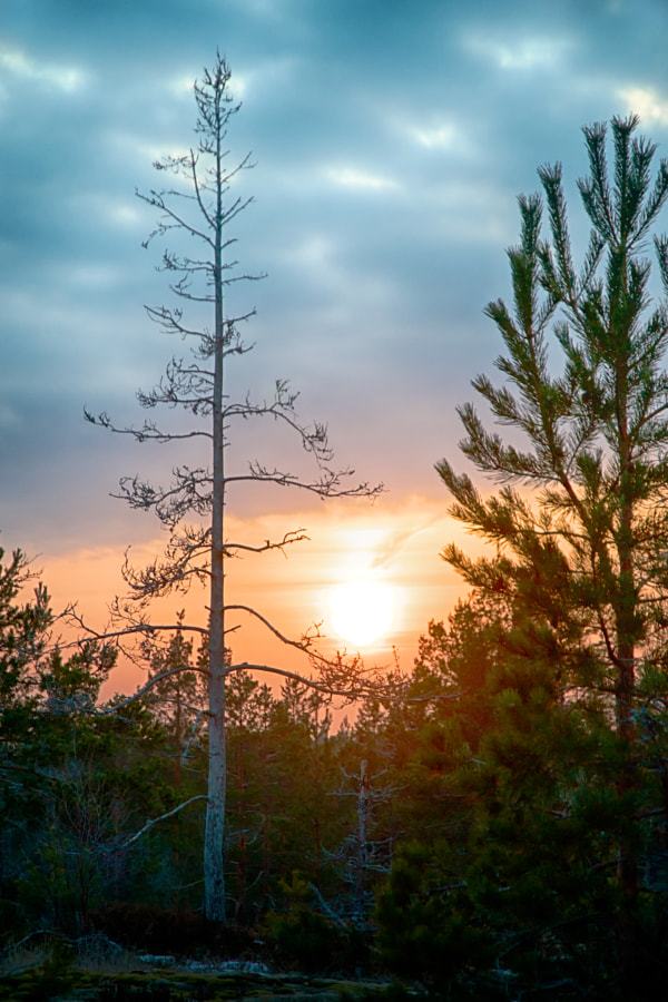 Sunset in Nuuksio National Park