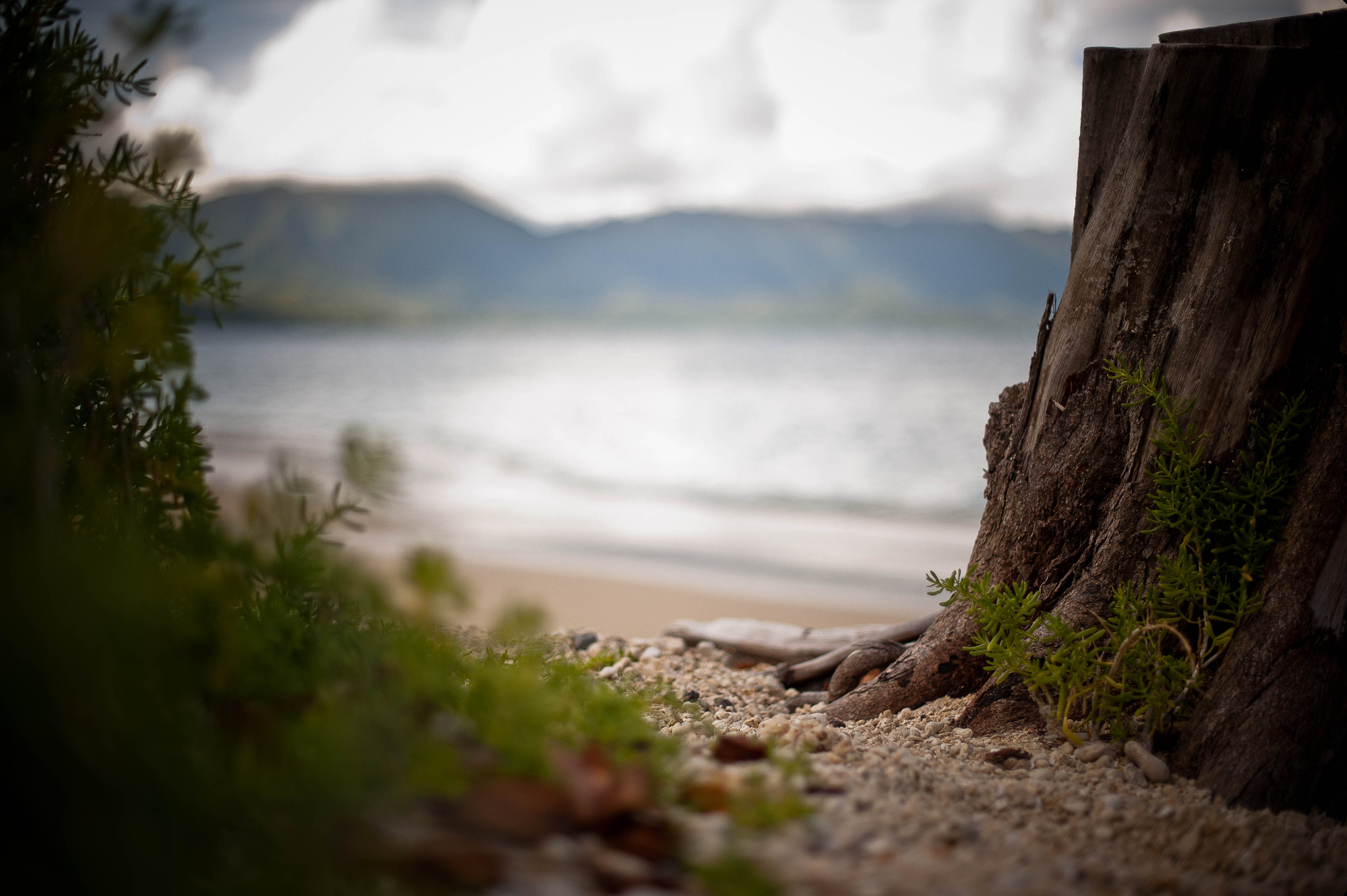 Photograph  Tree Stump and a Beach by Jason Bartimus on 500px