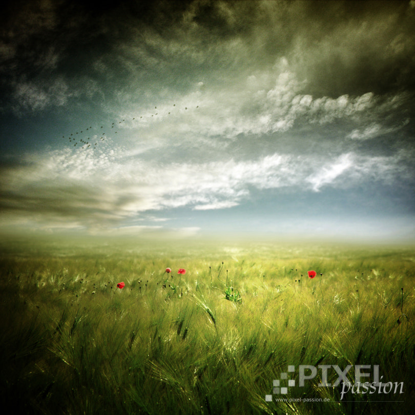 Photograph the cornfield by Pixel Passion on 500px