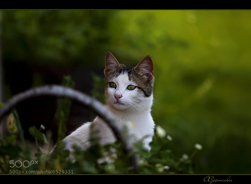 Photograph cat 2 by ömer göçmenler on 500px