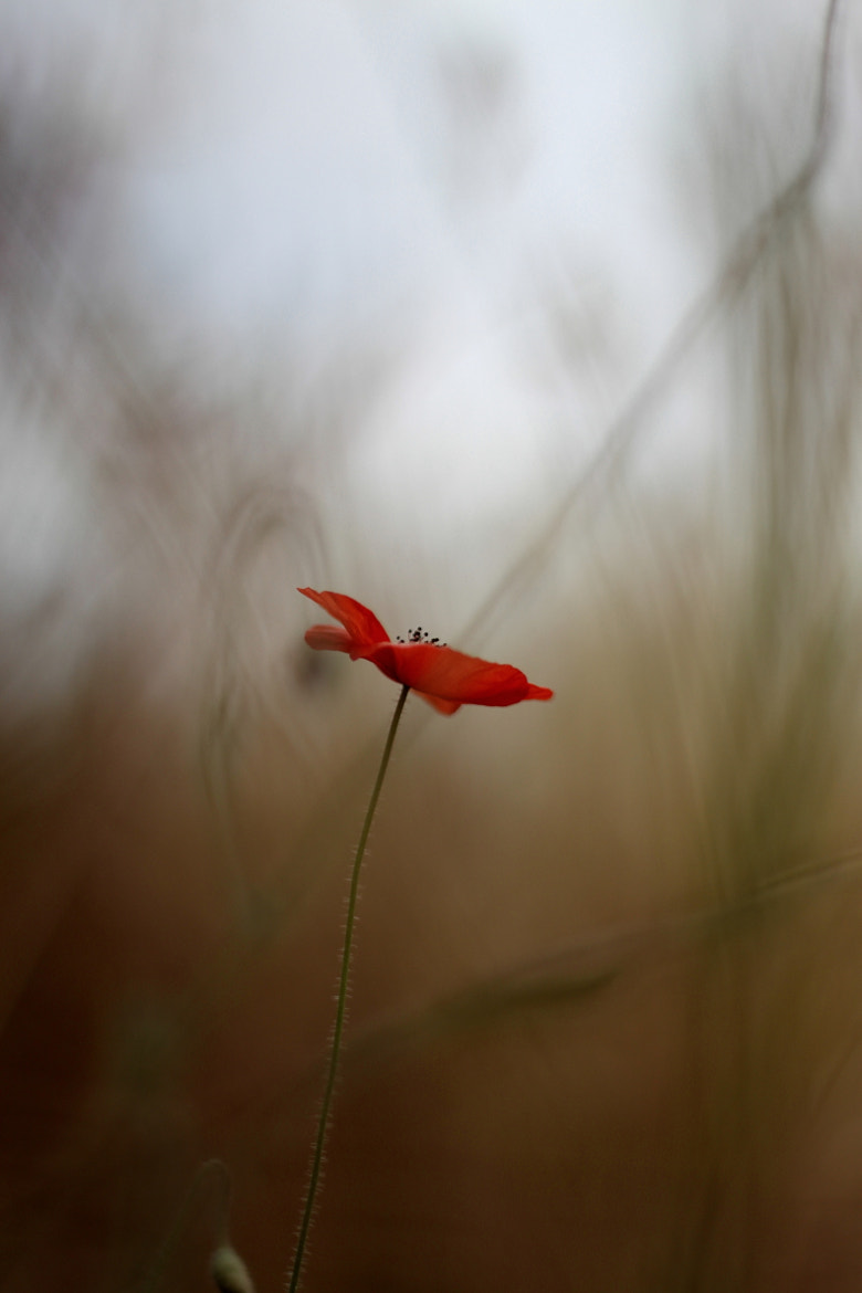 Photograph flower in  the midst of hazy shadow by Itzik Tetro on 500px