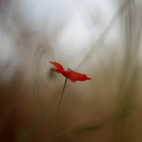 flower in  the midst of hazy shadow by Itzik Tetro (ItzikTetro)) on 500px.com