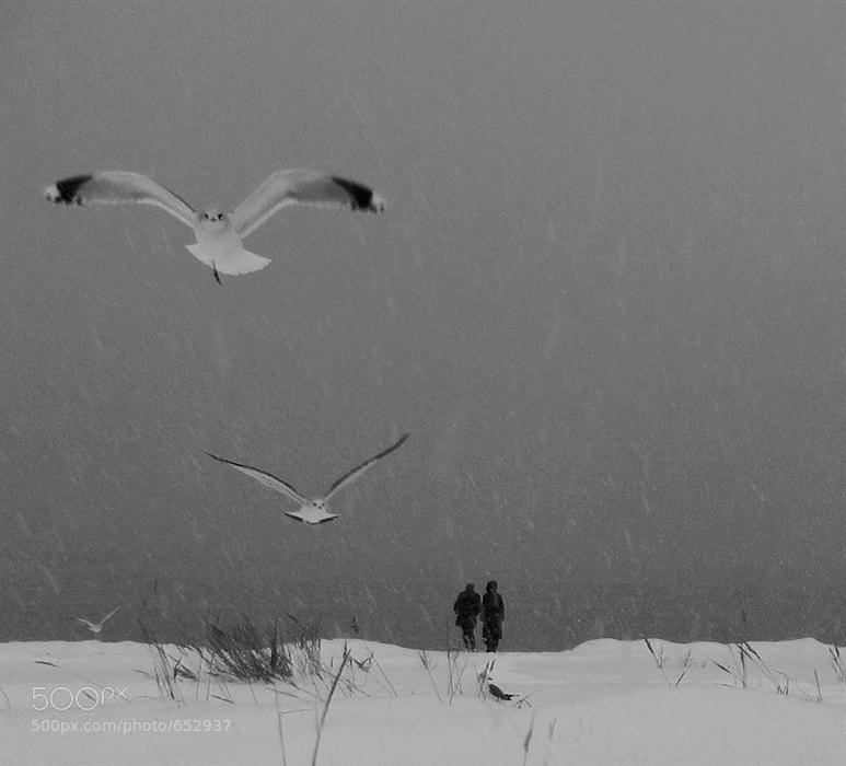 Photograph На берегу by Svetlana Suzi on 500px