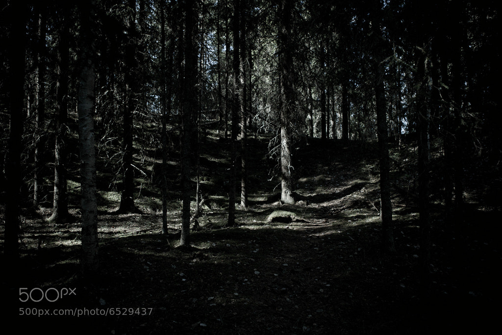 Photograph Dark woods of Sweden by Sebastian Tåli on 500px