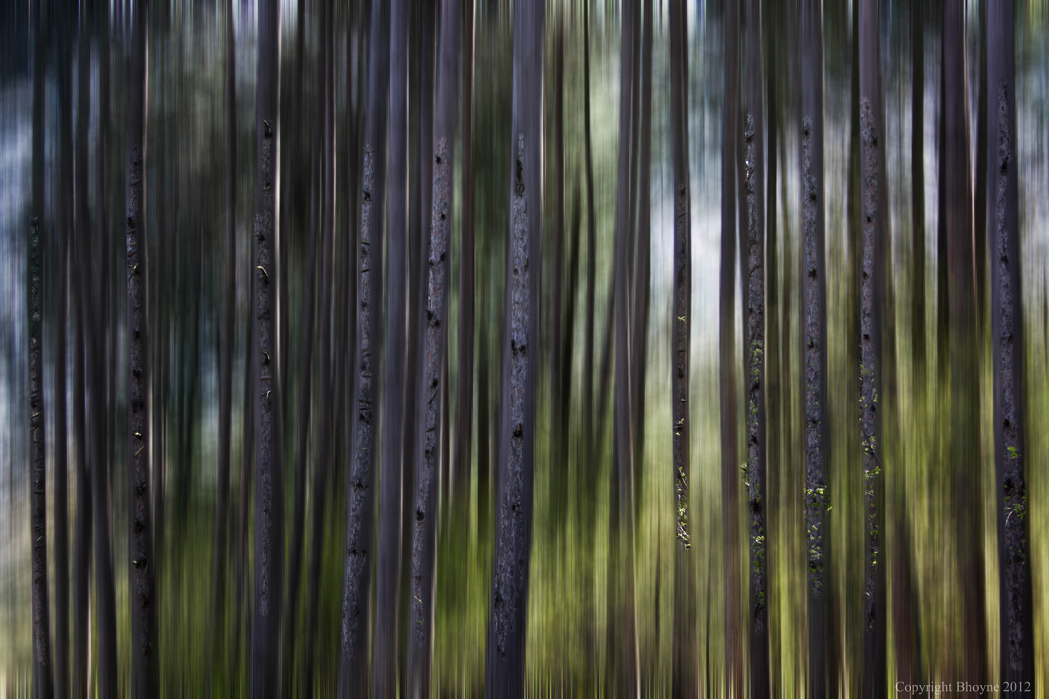 Photograph In the pines by Brian Hoyne on 500px