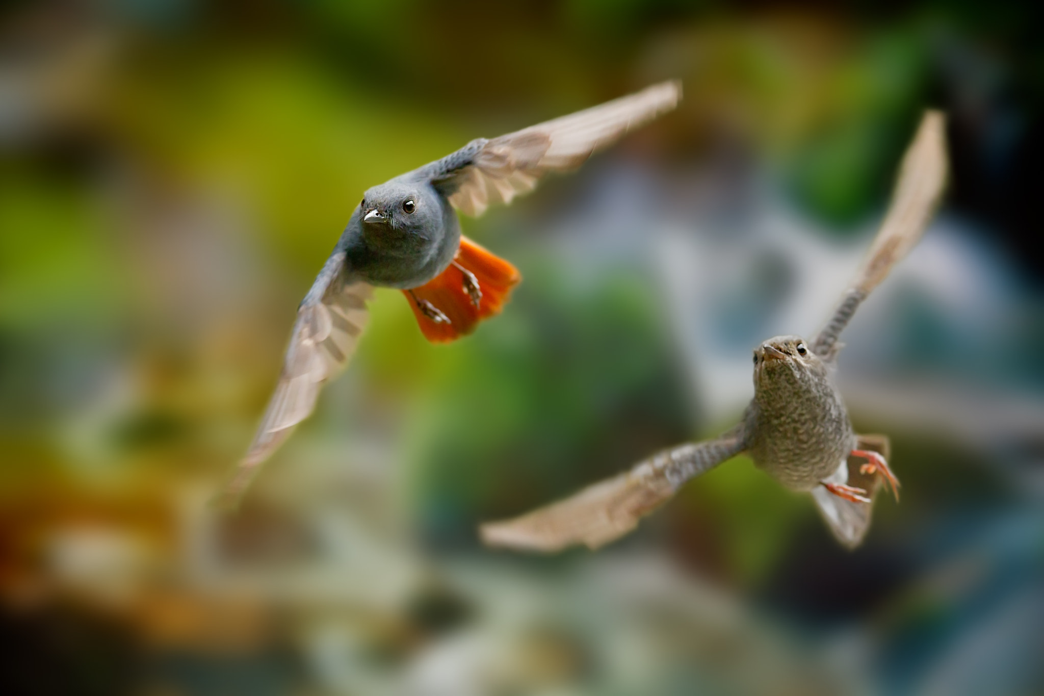 Photograph Fly With Me by Sue Hsu on 500px