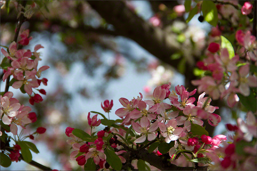 Photograph Spring Blossom 5 by Andrew Barrow LRPS on 500px