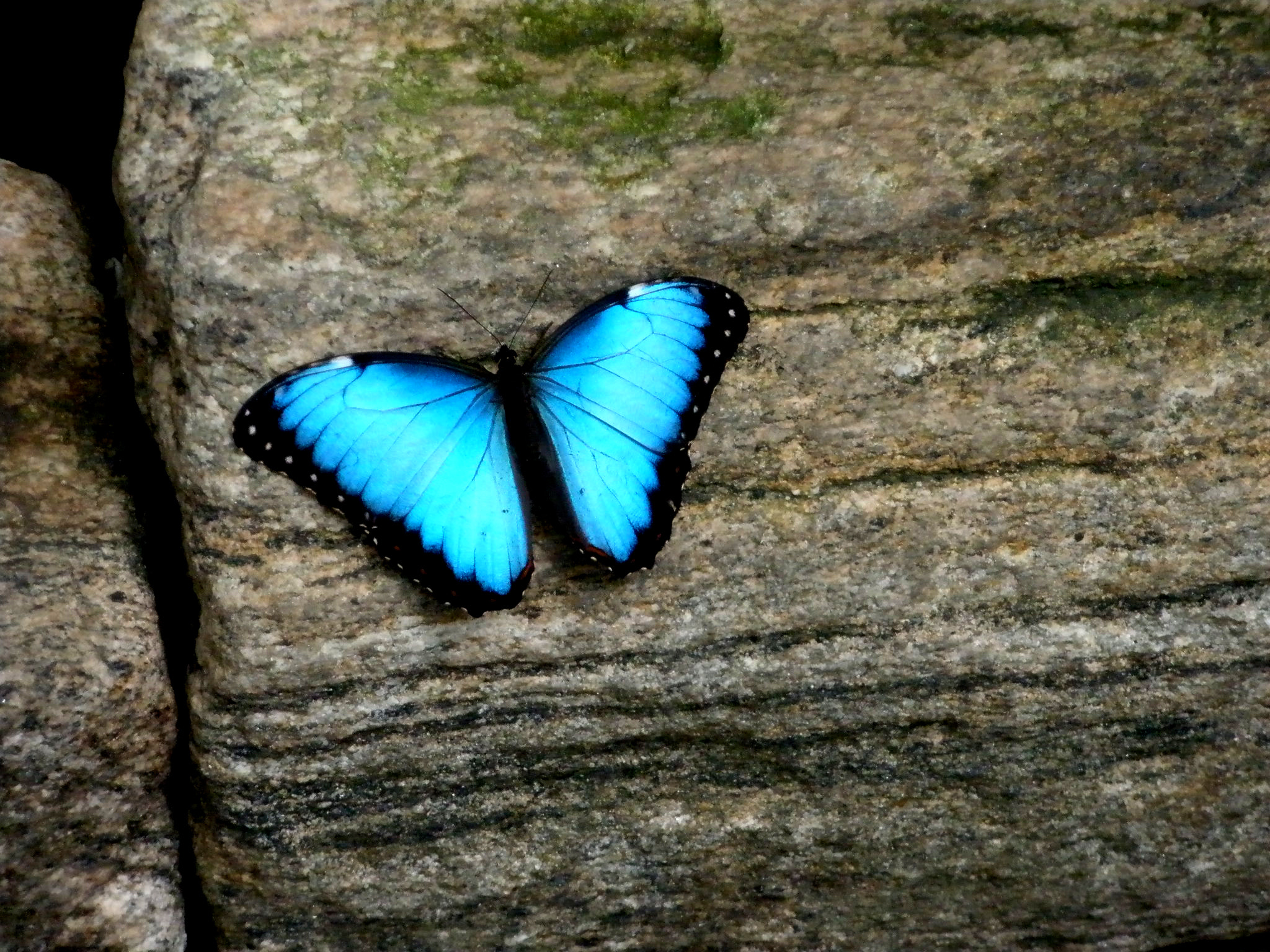 Photograph Butterfly by shahar shalom on 500px