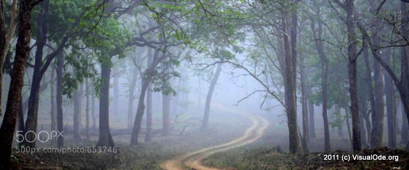 Photograph Misty Morning by Sudhakar Sadasivuni on 500px