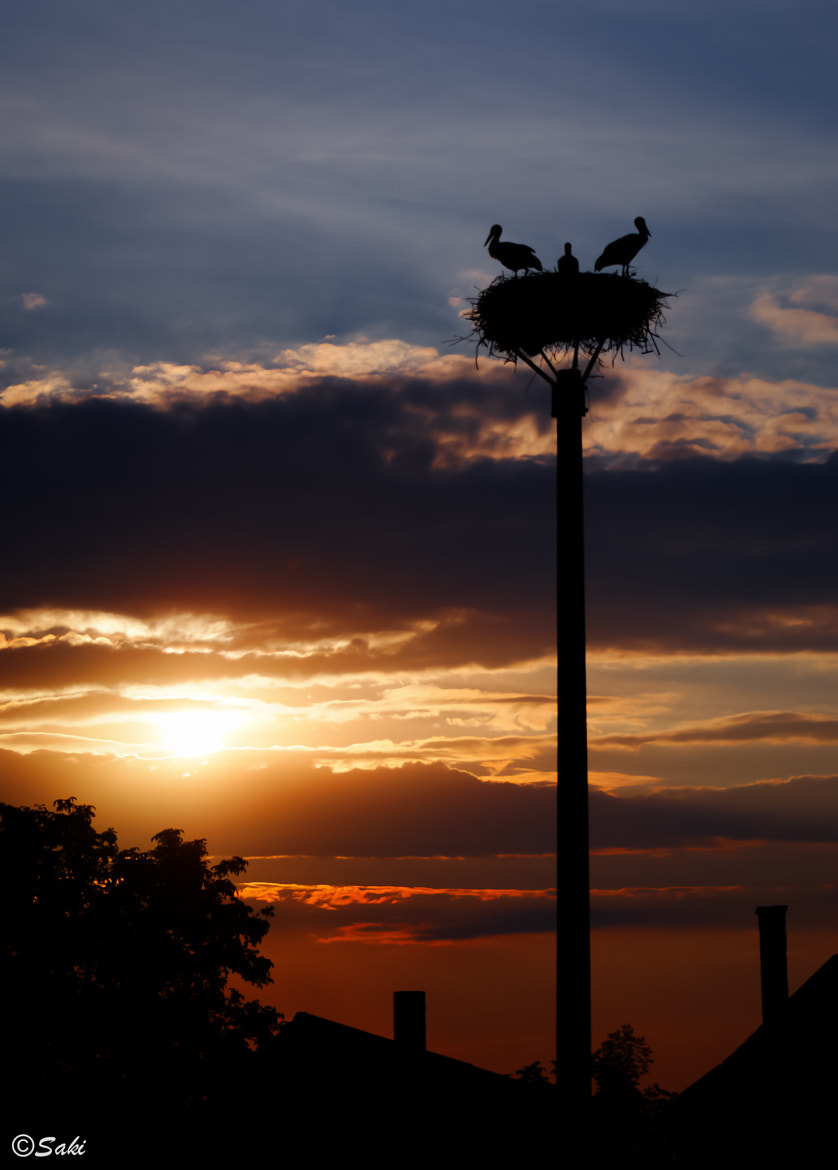 Photograph Storks at dusk by Jozef (Saki) Sakalos on 500px