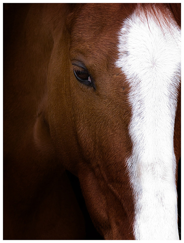 Photograph Horse Portrait by Ada Panich on 500px
