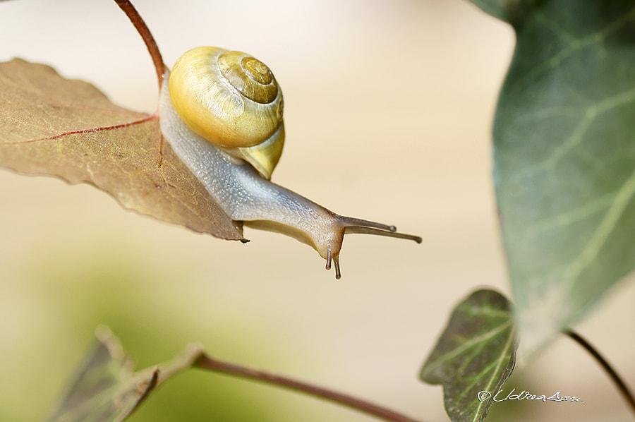 A snail running ... by Udrea Dan on 500px.com