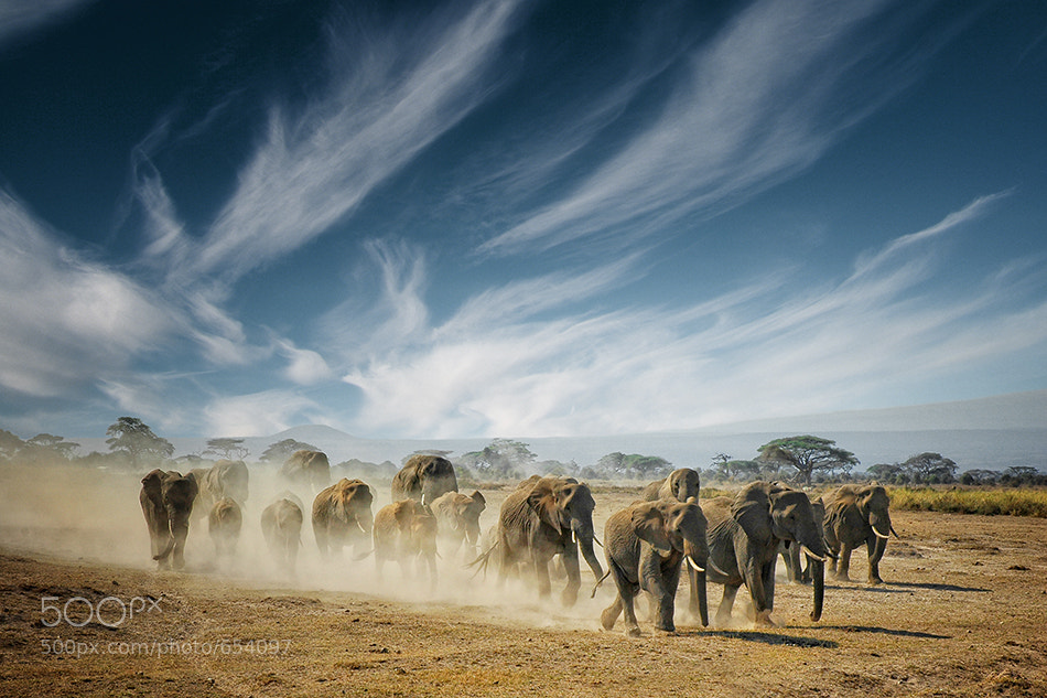 Photograph A very long search by Mathilde Guillemot on 500px