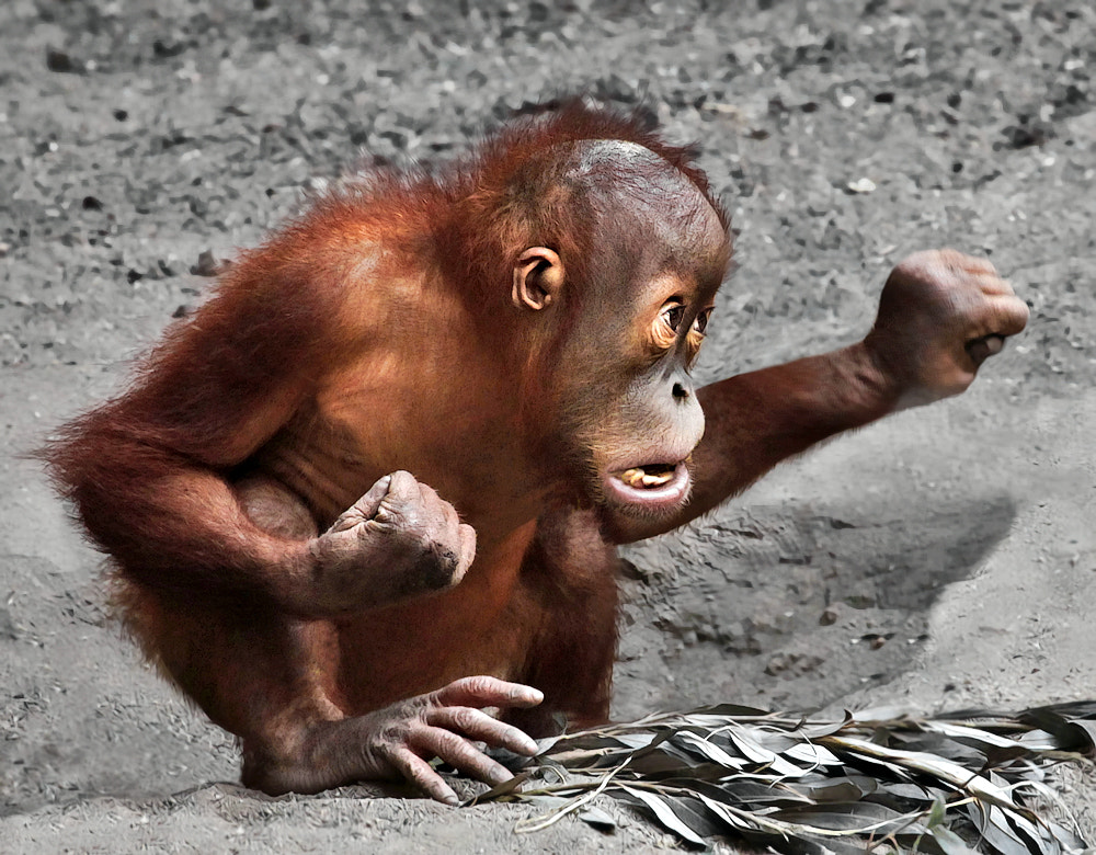 Photograph Kung Fu Orang by Klaus Wiese on 500px