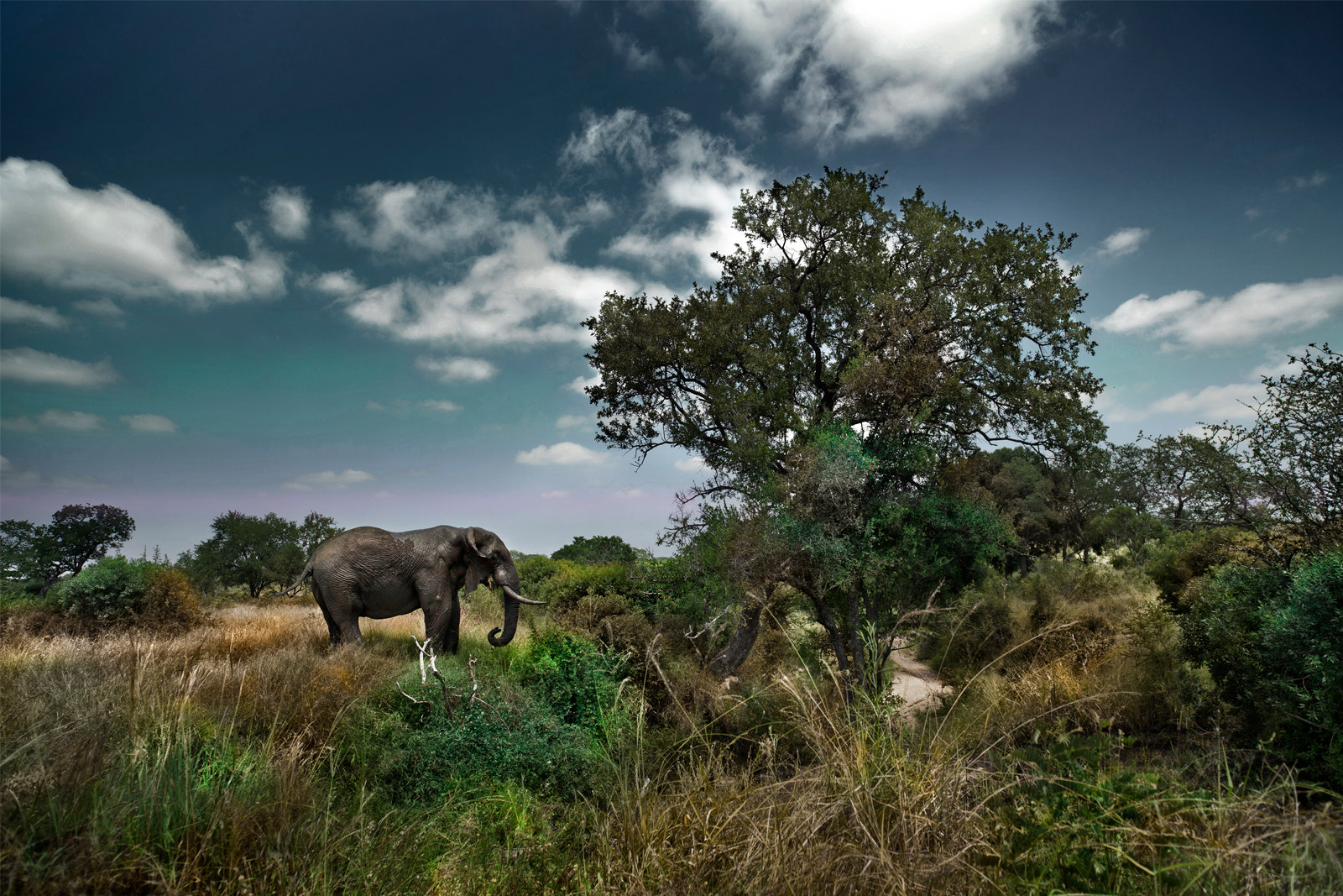 Photograph elephant in kruger by George Veltchev on 500px