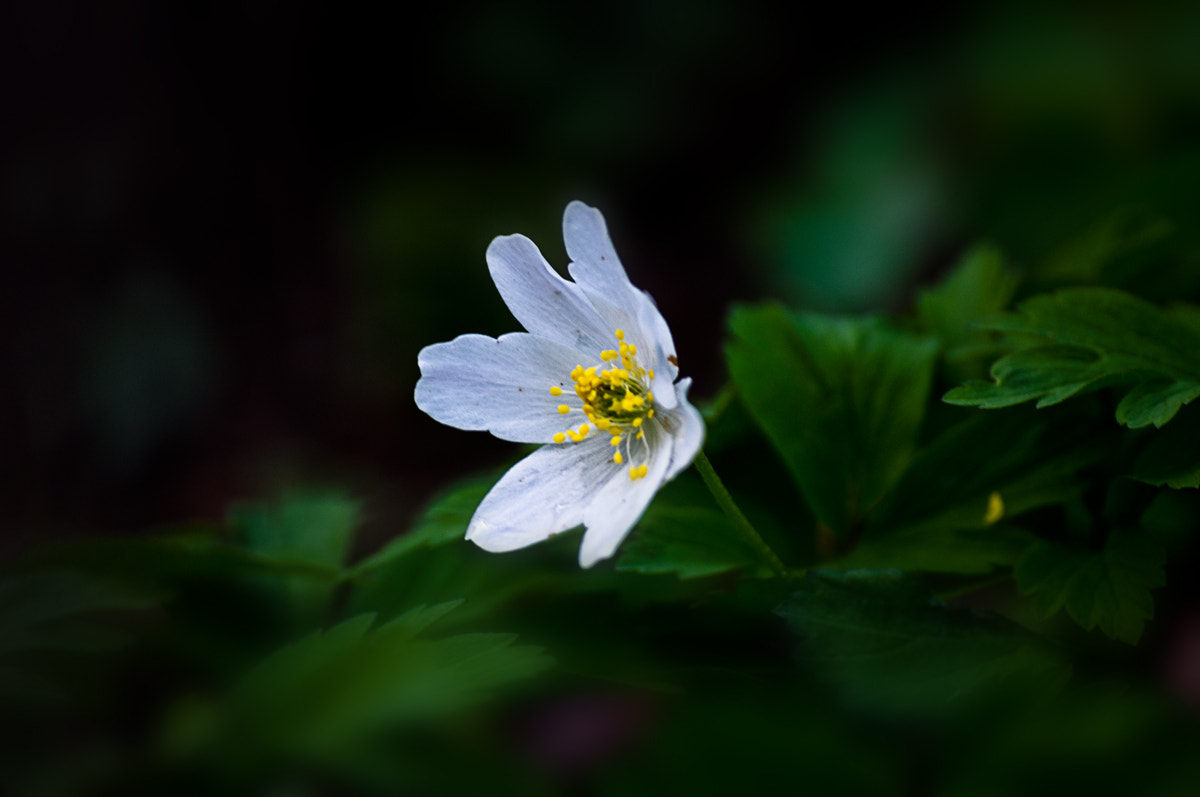 Photograph white Star by Felix W. Sch on 500px