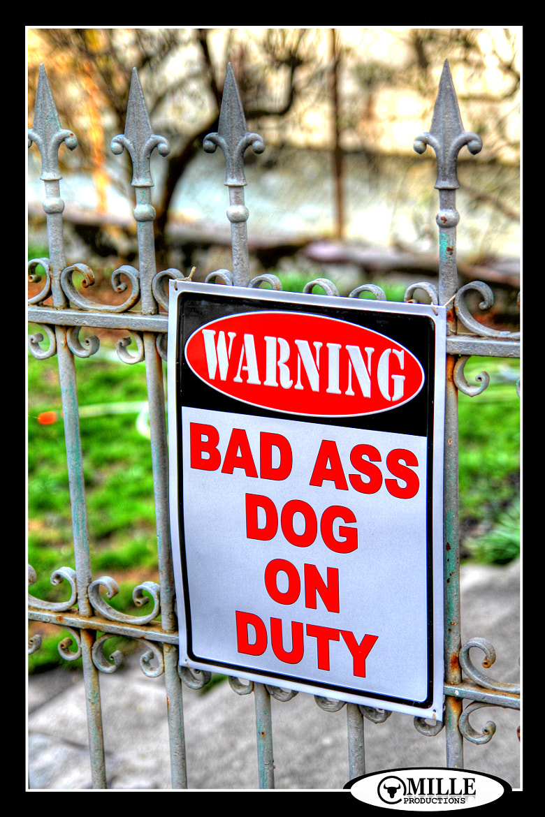 Photograph BAD ASS DOG ON DUTY by MILLE PRODUCTIONS on 500px