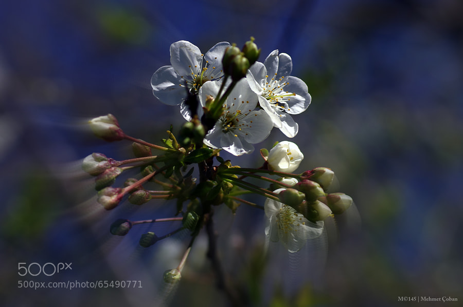 Photograph Blue and White Charm by Mehmet Çoban on 500px