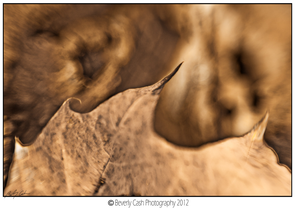 Photograph  Leaf and Wood by Beverly Cash on 500px