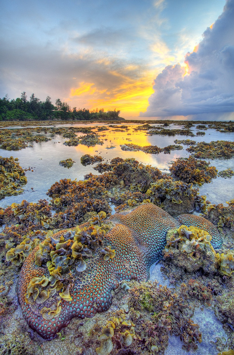 Photograph Low tide by Muhammad Khasif on 500px