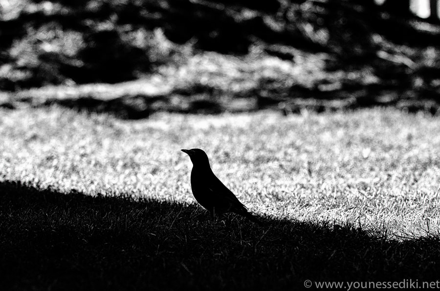 Photograph Hitchcock by younes sediki on 500px