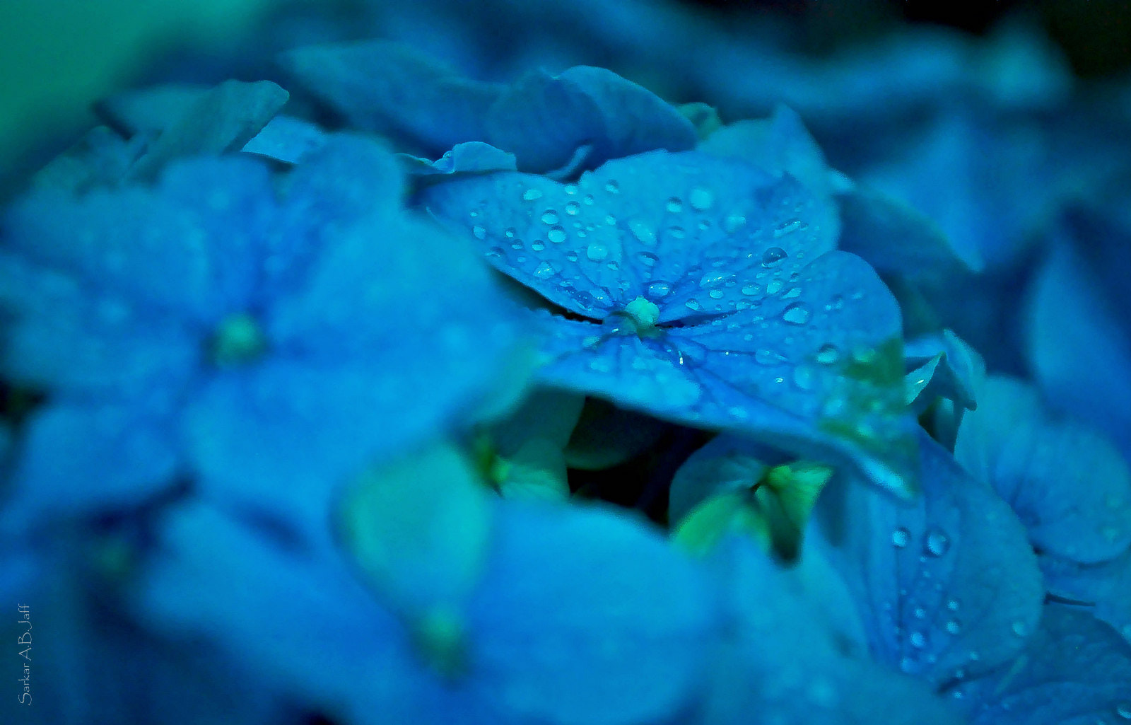 Photograph BLUE by saro jaf on 500px