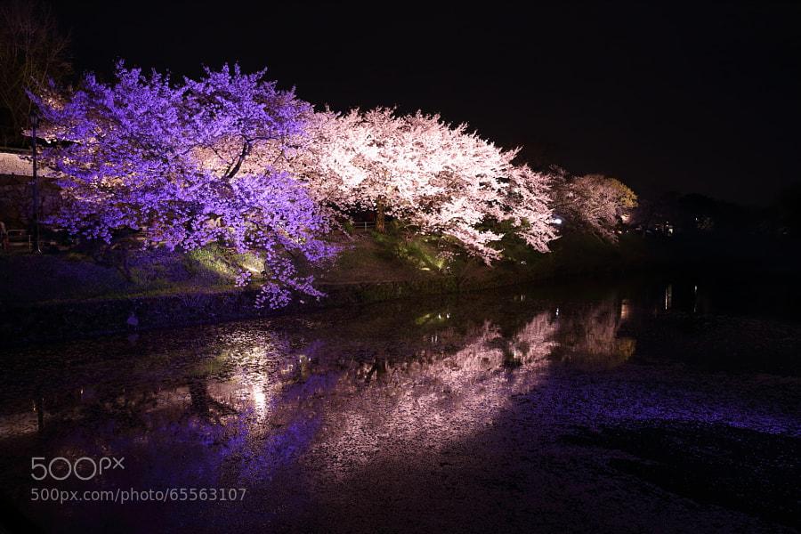 Photograph 福岡城さくらまつり2 by Tetsuya Katsuge on 500px