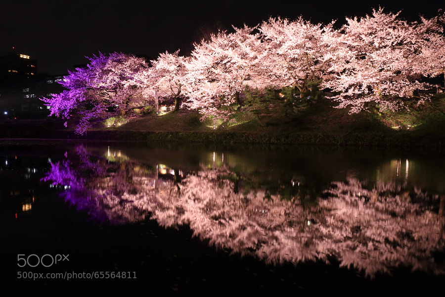 Photograph 福岡城さくらまつり4 by Tetsuya Katsuge on 500px