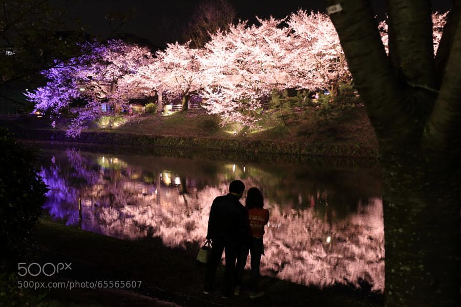 Photograph 福岡城さくらまつり5 by Tetsuya Katsuge on 500px