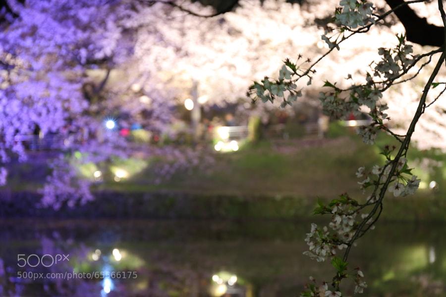 Photograph 被写体ぶれしてしまった桜 by Tetsuya Katsuge on 500px