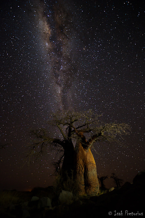 Photograph Kubu nights by Isak Pretorius on 500px