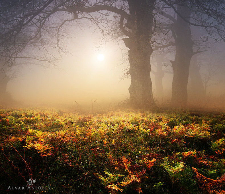 Photograph Forest with fog by Alvar Astúlez on 500px