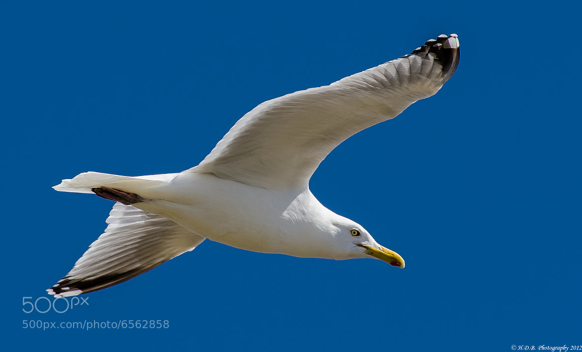 Photograph Flying High by Harold Begun on 500px