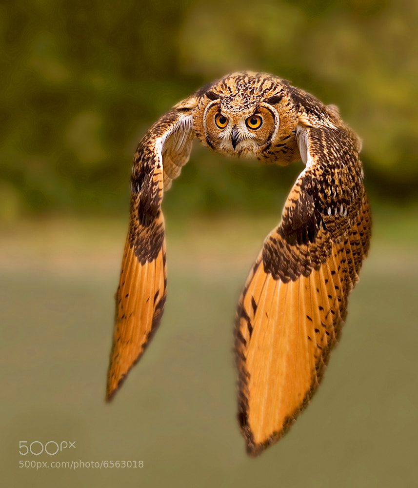 Photograph I come to you by Stefano Ronchi on 500px