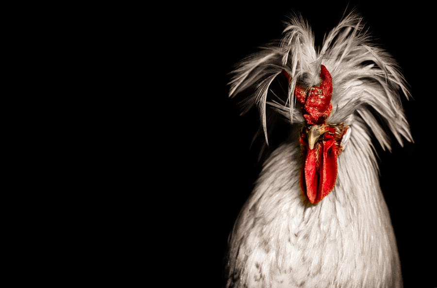 Chicken tender by Alan Shapiro on 500px.com