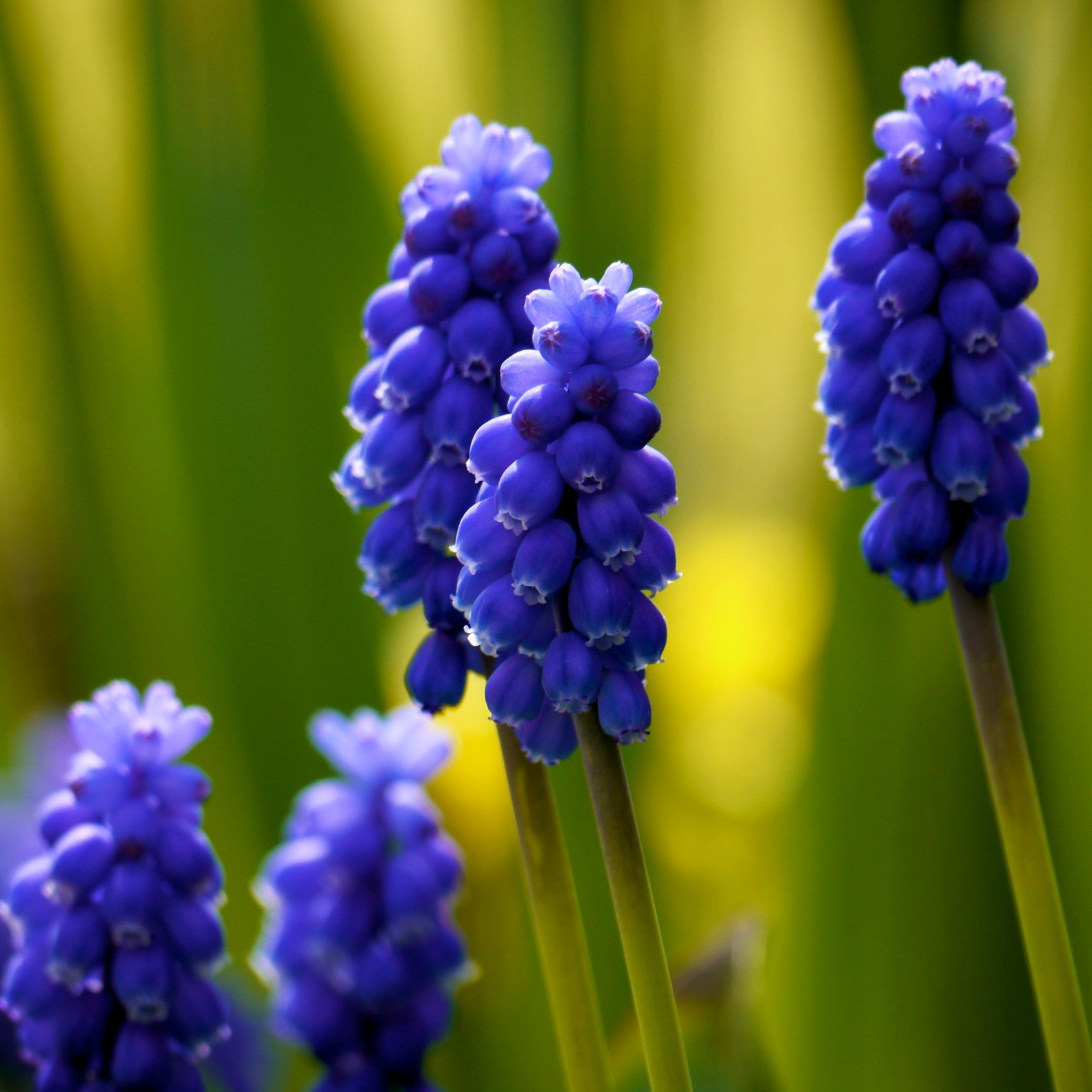 Photograph Muscari Towers by John Purchase on 500px