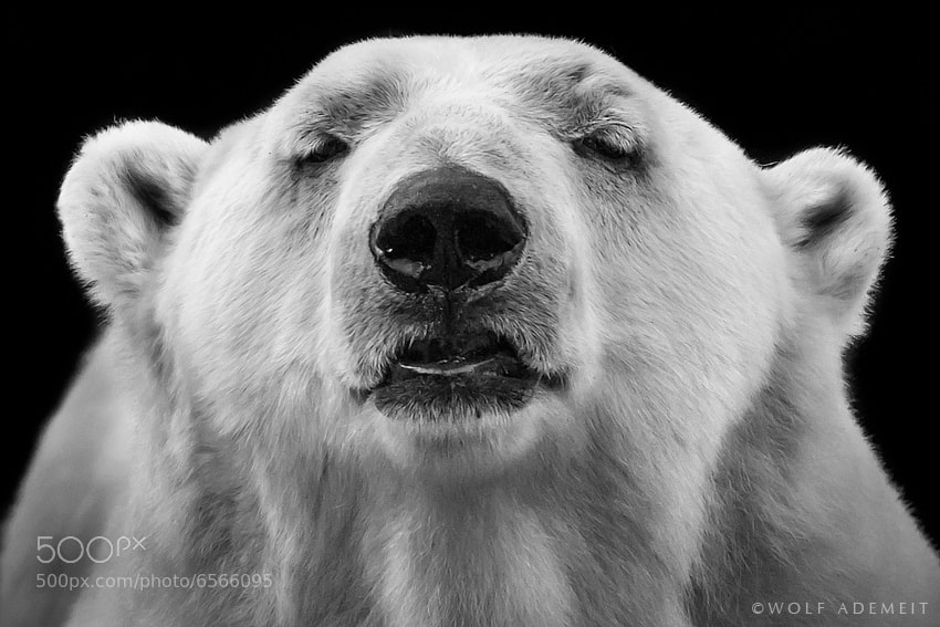 Photograph SNOOPER by Wolf Ademeit on 500px