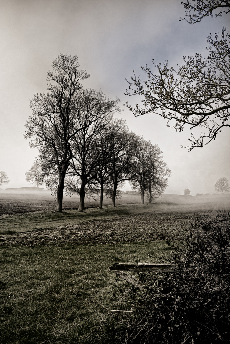 Photograph Early Morning Mist by Alan Sheers on 500px