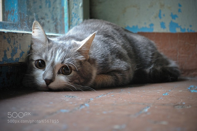 Photograph lonely by Andrey Byzov on 500px