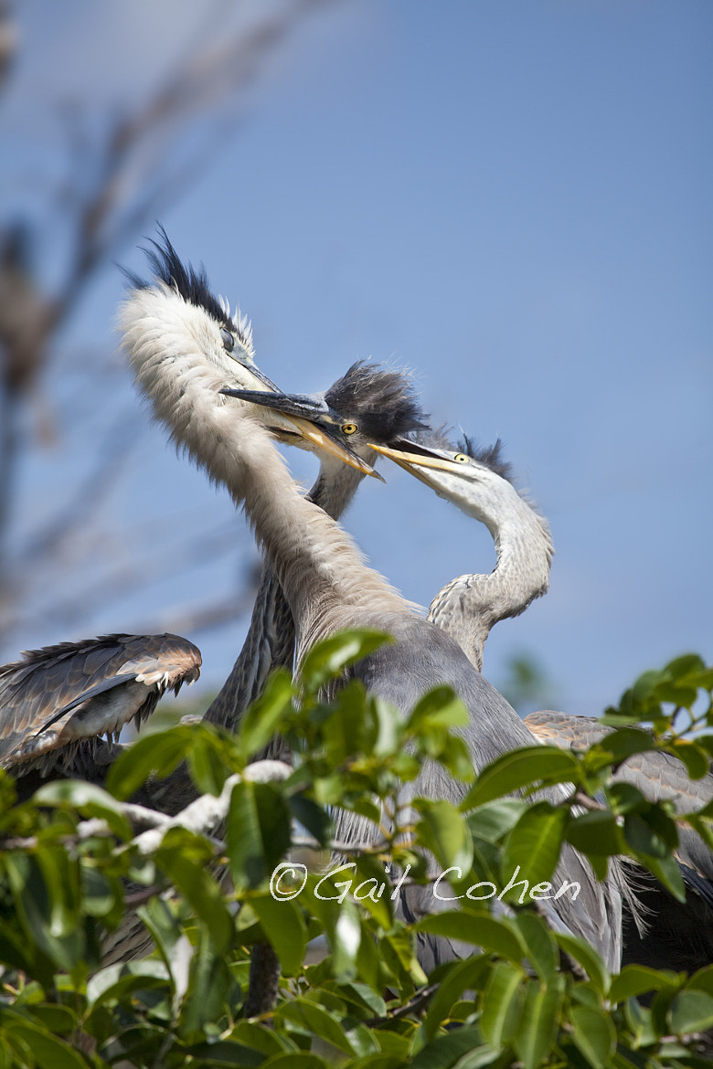 Photograph Feeding Frenzy by Gail  Cohen on 500px