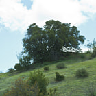 One of the many stunning hills in the Santa Monica Mountains. Located in Tarzana, California.