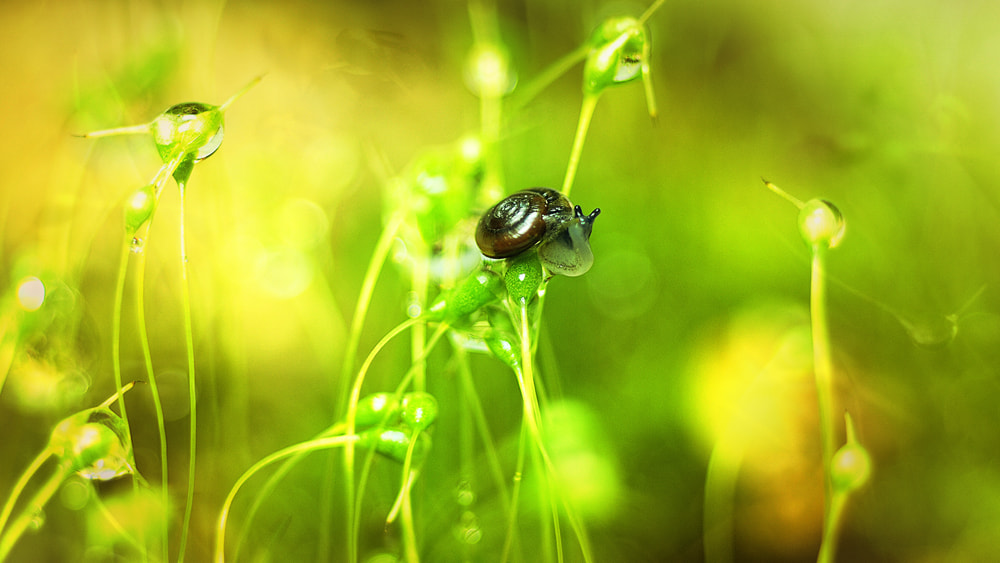 Photograph snail by park seo jin on 500px
