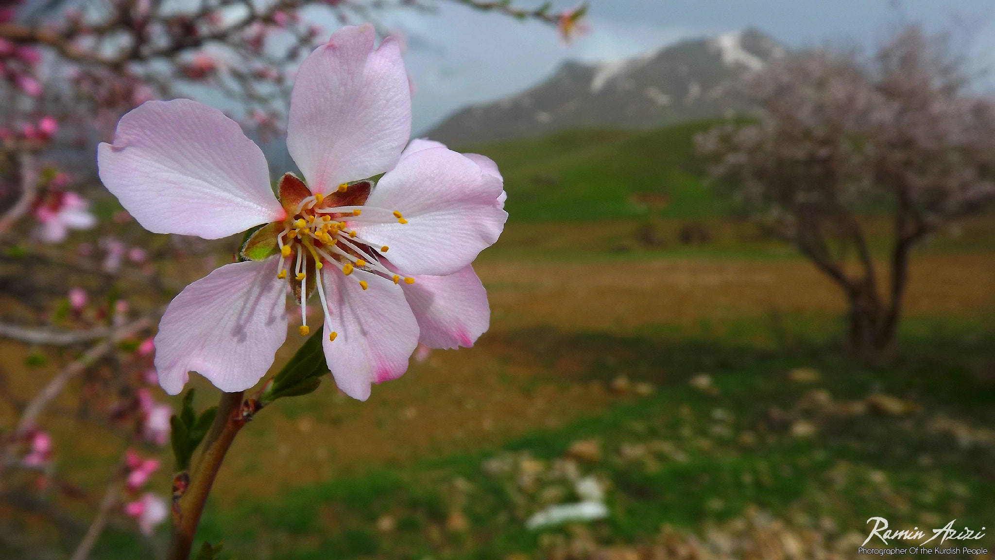 Photograph Welcome Spring by ramin azizi on 500px