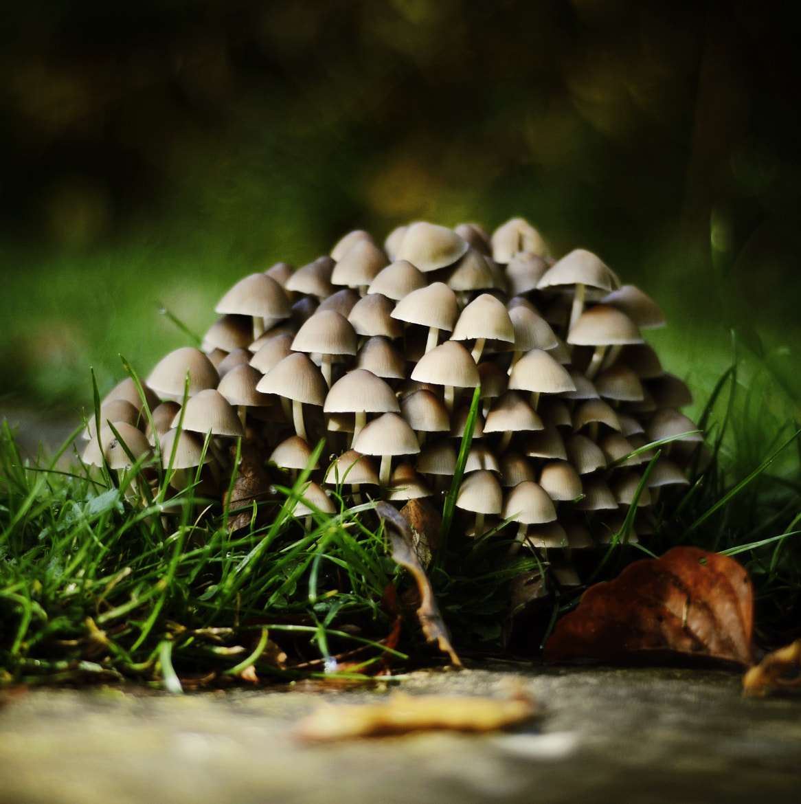 Photograph Mushrooms by Sam Knight on 500px