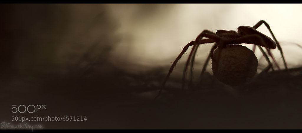 Photograph Into the spider's den by AimishBoy (Nadav Bagim) on 500px