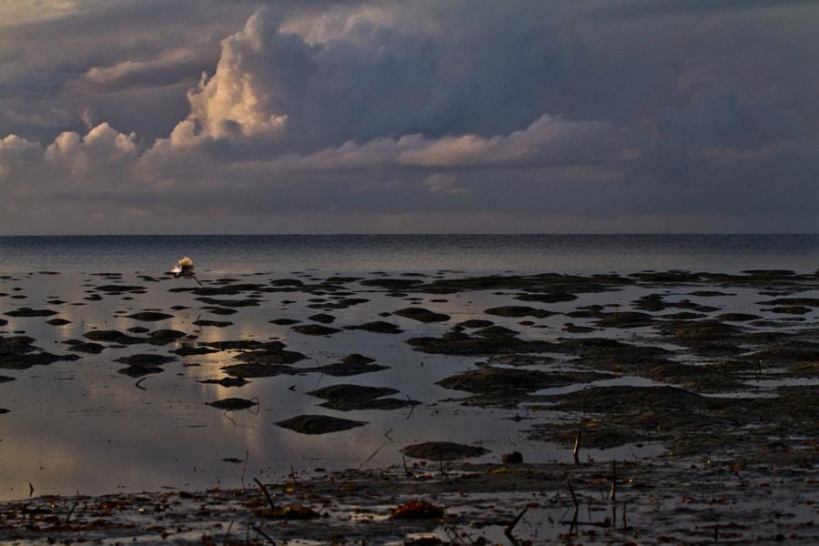 Low tides